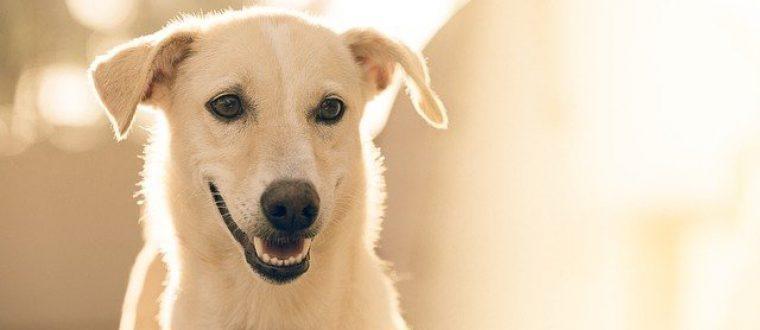הכירו את רשת יונימל: מוצרים איכותיים לכלבים
